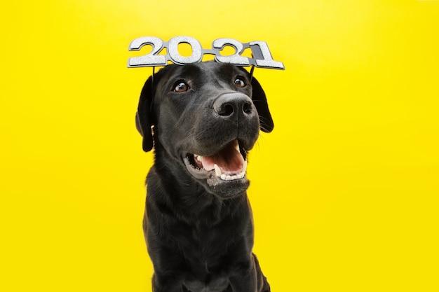 Glücklicher labradorhund, der neues jahr 2021 mit textbrille feiert.