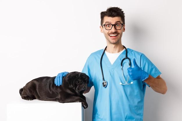 Glücklicher männlicher arzt tierarzt untersucht süßen schwarzen hund mops, daumen nach oben in zustimmung zeigend, zufrieden mit der tiergesundheit, stehend auf weißem hintergrund.