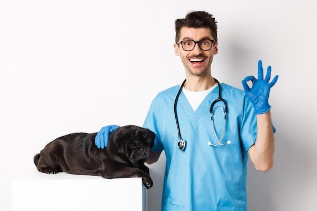 Glücklicher männlicher arzttierarzt, der niedlichen schwarzen hundemops untersucht, in ordnung zeigt, zustimmung genehmigt, mit tiergesundheit zufrieden, über weiß stehend.