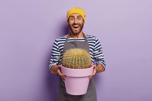 Glücklicher männlicher botaniker überrascht kaktus wuchs so schnell, hält lila topf mit stacheligen zimmerpflanze