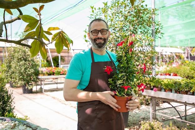 Glücklicher männlicher florist, der im gewächshaus geht, topf mit blühender pflanze hält, mittlerer schuss, kopienraum. gartenarbeit oder botanikkonzept