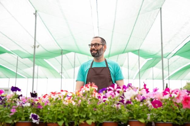Glücklicher männlicher gärtner, der nahe petunienpflanzen im garten steht und wegschaut