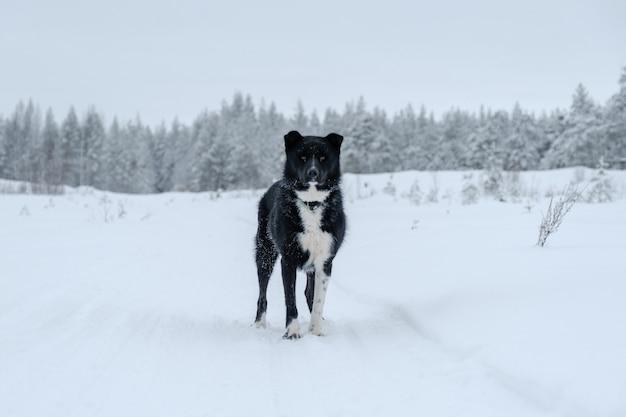 Glücklicher mischlingshund, der im winter draußen steht