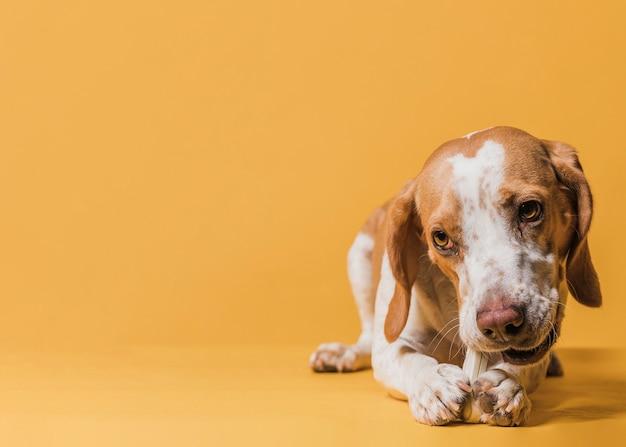 Glücklicher netter hund mit kopienraum