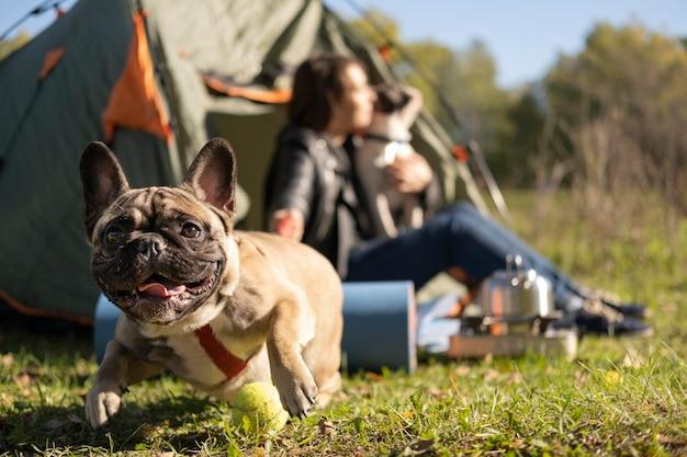 Glücklicher niedlicher hund, der draußen spielt