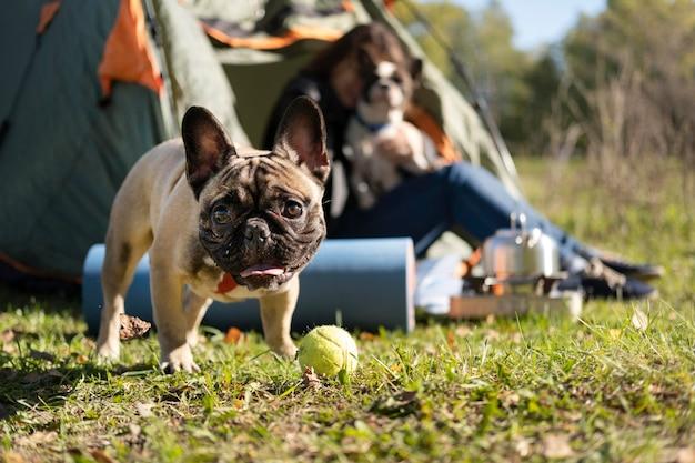 Glücklicher niedlicher hund, der neben dem zelt spielt