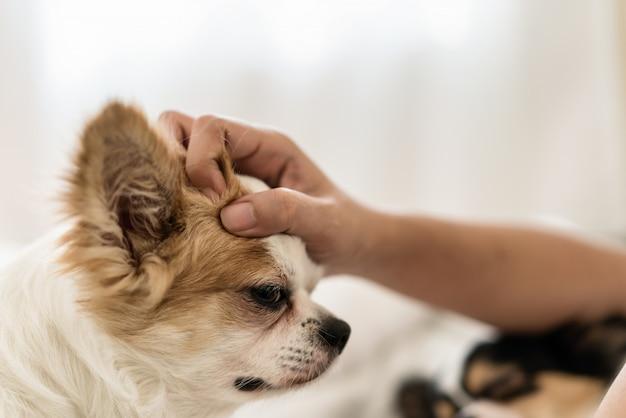 Glücklicher schläfriger langer haarhund liebt, von der hand des mannes geklopft oder gestreichelt zu werden
