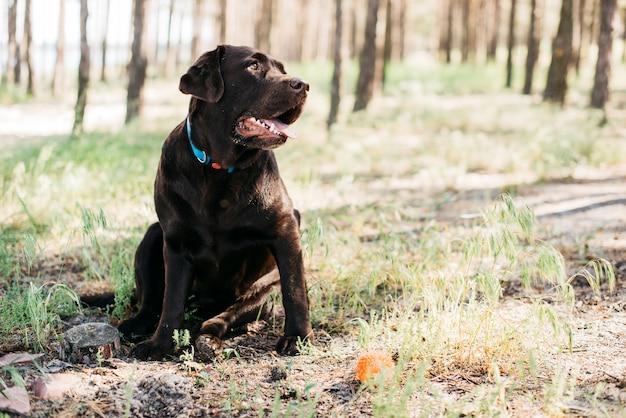 Glücklicher schwarzer hund in der natur