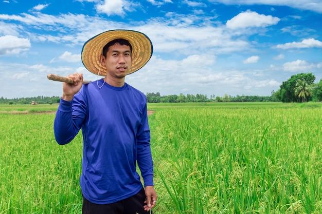 Glücklicher thailändischer männlicher landwirt, der reis in der landschaft thailand erntet