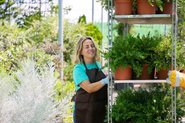 Glücklicher weiblicher florist, der gestell mit pflanzen in töpfen bewegt, regal mit zimmerpflanzen hält. mittlere aufnahme, kopierraum. gartenberufskonzept