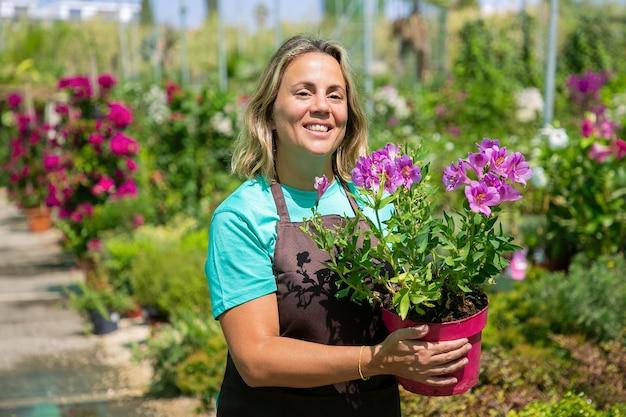 Glücklicher weiblicher florist, der im gewächshaus geht, topfblütepflanze hält und lächelt. mittlere aufnahme, kopierraum. gartenarbeit oder botanikkonzept