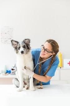Glücklicher weiblicher tierarzt, der den hund mit stethoskop überprüft