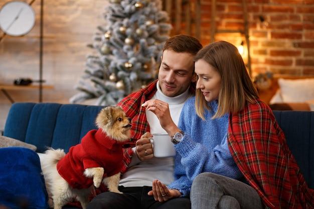 Glückliches junges paar, das mit pommerschen spitzhund spielt, der nahe schönen weihnachtsbaum zu hause sitzt