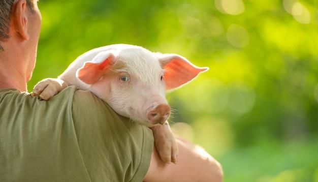 Glückliches junges schwein auf den händen der besitzer auf einer grünen wiese konzept der liebe zur natur vegan vegetarisch