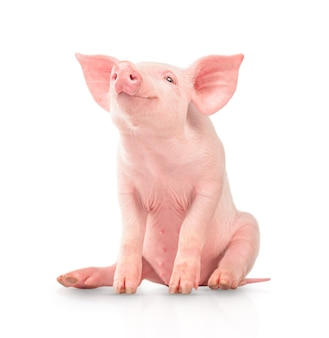 Glückliches junges schwein getrennt auf weißem hintergrund. lustige tiere emotionen.