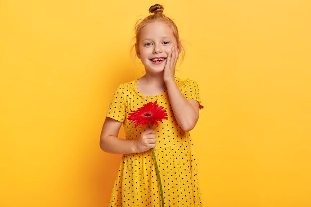 Glückliches kleines kind mit ingwerhaarbrötchen, berührt sanft wange, trägt modisches gelbes tupfenkleid, hält rote gerbera, will blume für ihre mutter geben, hat fröhlichen ausdruck. helle farben