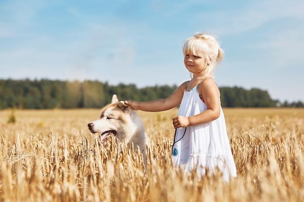 Glückliches kleines mädchen mit einem hund husky, der im weizenfeld auf sonnenuntergang spielt.