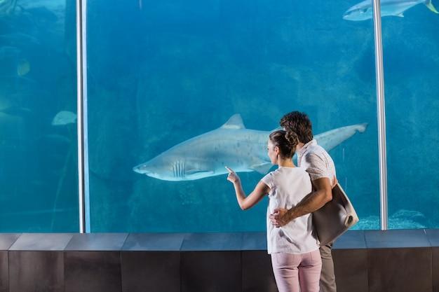 Glückliches paar, das haifisch betrachtet
