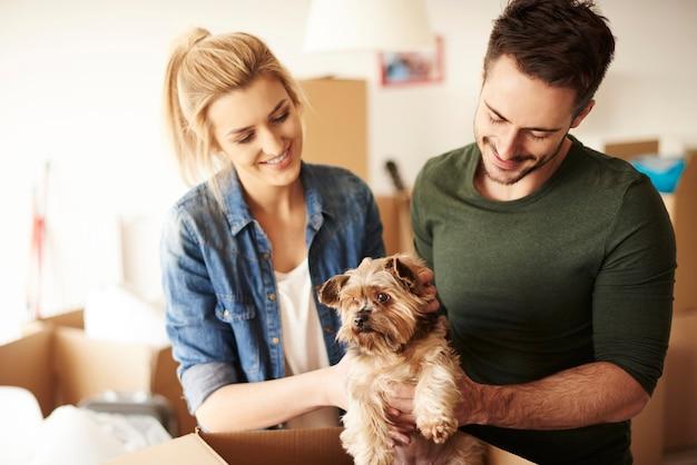 Glückliches paar, das hund in box steckt
