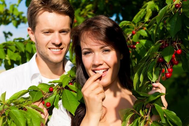 Glückliches paar, das kirschen vom kirschbaum isst