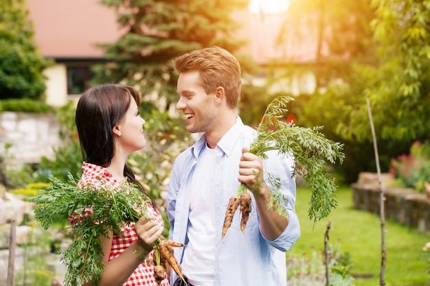 Glückliches paar im gemüsegarten, der karotten erntet