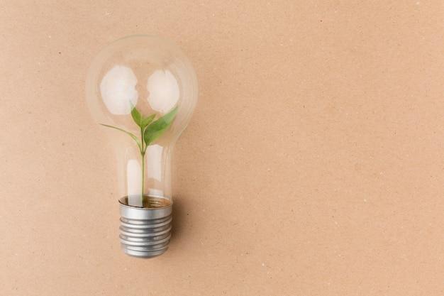 Glühbirne mit kleiner pflanze im inneren