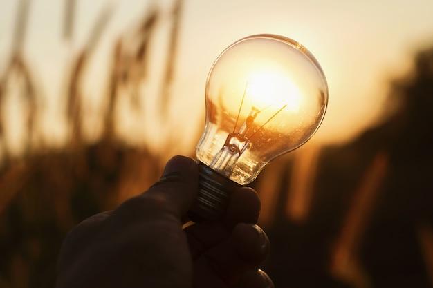 Glühbirne mit sonnenuntergang natur hintergrund. energie-energie-konzept