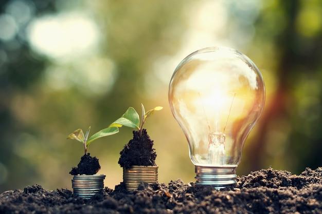 Glühlampe auf boden mit der jungpflanze, die auf geld wächst