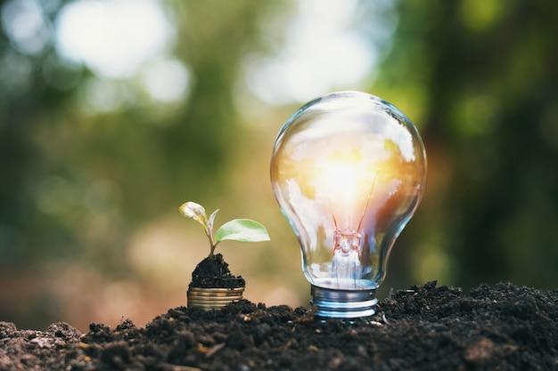 Glühlampe auf boden mit der jungpflanze, die auf geldstapel wächst