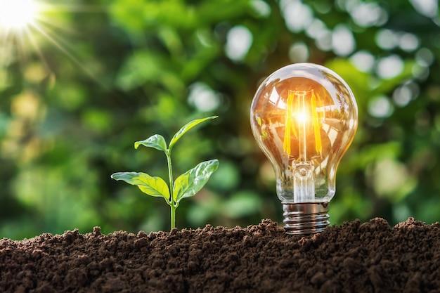 Glühlampe mit kleinem baum auf boden in der natur und im sonnenschein. konzept einsparung