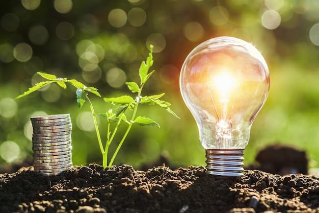 Glühlampe mit kleinem baum- und geldstapel auf boden im natursonnenuntergang