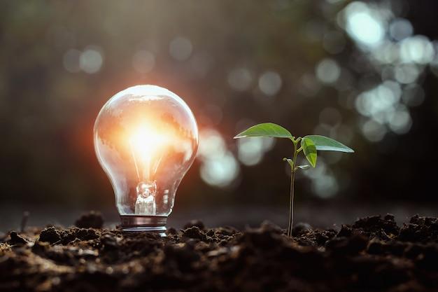 Glühlampe und kleines baumwachstum auf boden mit sonnenuntergang. solarenergiekonzept