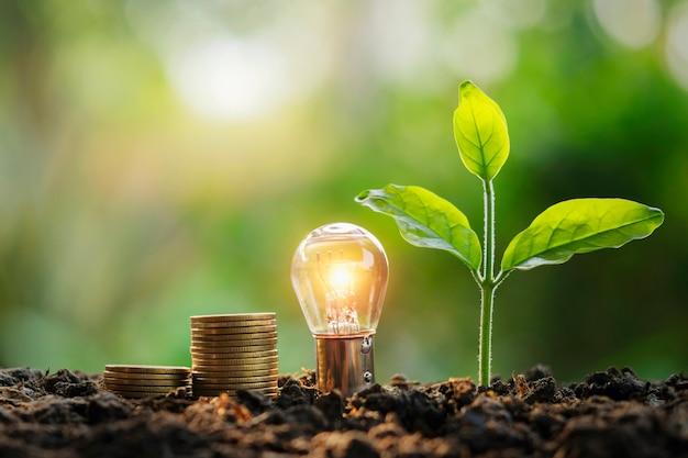 Glühlampengeldstapel und jungpflanze in der natur. idee, die energie spart und buchhaltungsfinanzkonzept