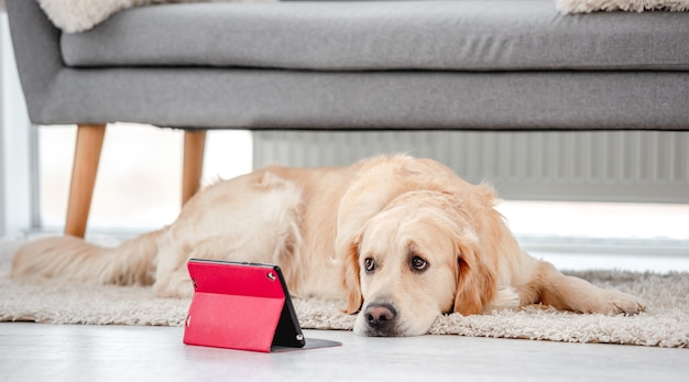 Golden retriever hund, der auf dem boden liegt und rote tablette innen betrachtet
