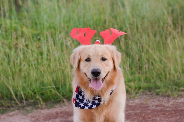 Golden retriever-weihnachtshund