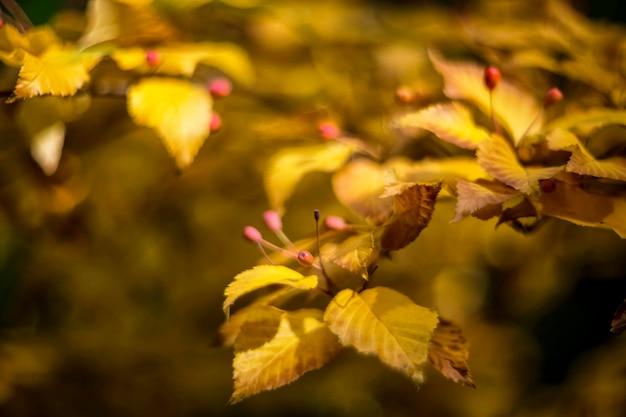 Goldene blätter auf ast in der herbstsaison