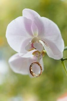 Goldene eheringe hängen an weißer orchidee