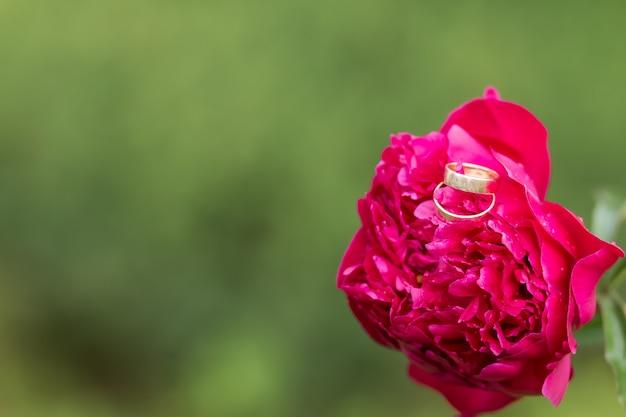 Goldene eheringe und pfingstrosenblumen. engagement und hochzeitskonzept