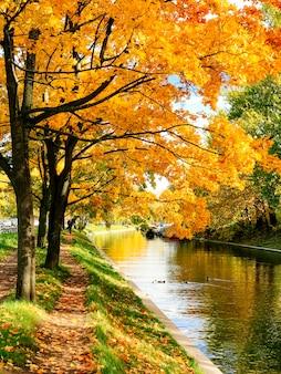 Goldene herbstbäume und weg in gefallenen blättern nahe kanal bei sonnigem wetter. fallen