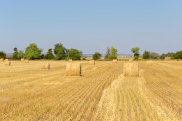 Goldene heuballen in der landschaft