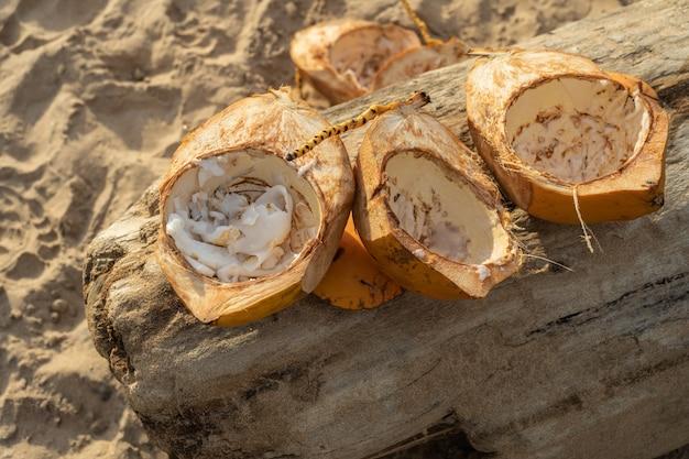 Goldene kokosnüsse liegen auf einem baumstamm im sand