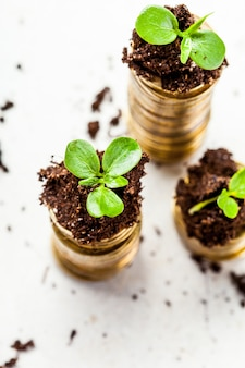 Goldene münzen im boden mit jungpflanze. geldmengenwachstum konzept.