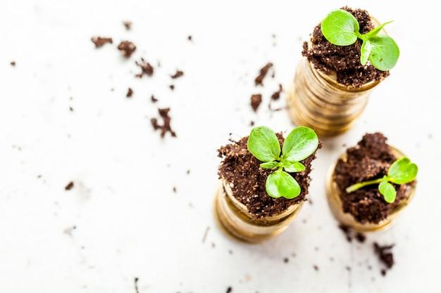 Goldene münzen im boden mit jungpflanze.