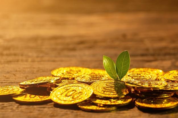 Goldene münzen mit jungpflanze