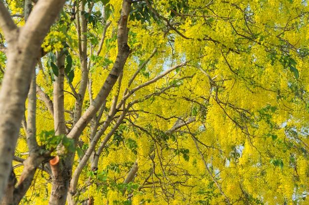 Goldene regenbäume