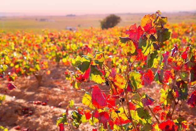 Goldene rote weinberge des herbstes in utiel requena