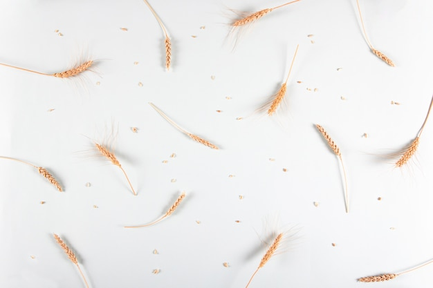 Goldene weizen- und roggenohren, trockene getreideährchen an leichter wand