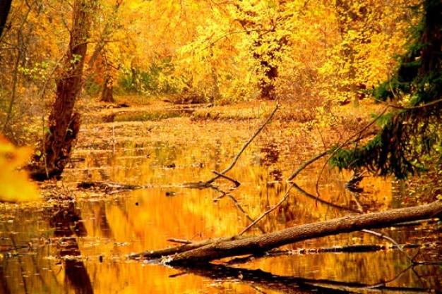 Goldenen wald