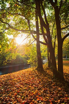 Goldener herbst herbst oktober im berühmten münchen relax place englishgarten münchen bayern deutschland