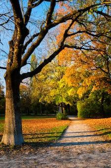 Goldener herbst herbst oktober im berühmten münchner entspannungsort - englishgarten. münchen, bayern, deutschland